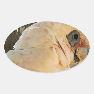 Ojos del pájaro pegatina ovalada