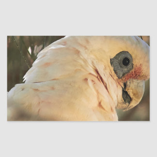 Ojos del pájaro pegatina rectangular