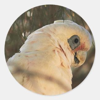 Ojos del pájaro pegatina redonda