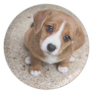Ojos del perro de perrito plato de comida