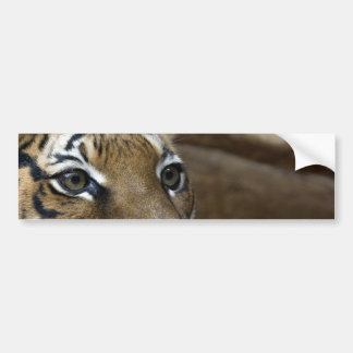 Ojos del tigre pegatina para coche