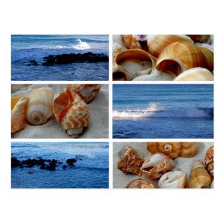 ondas y postal de las cáscaras