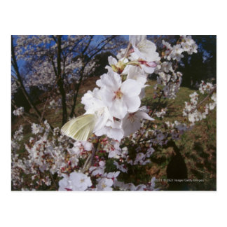 Opinión de Fisheye la mariposa en la flor Postal