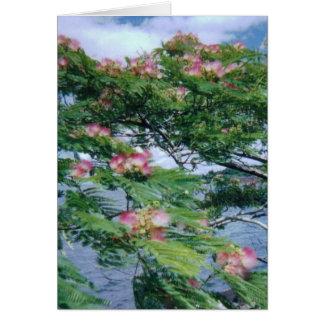 Opinión de los flores y del agua del Mimosa Tarjeta