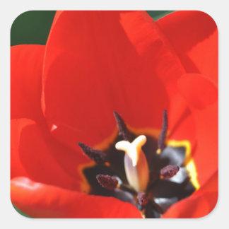 Opinión del tulipán pegatina cuadrada