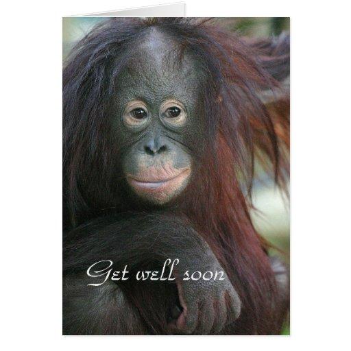 Orang utan consigue la tarjeta bien