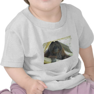 orangután masculino camisetas