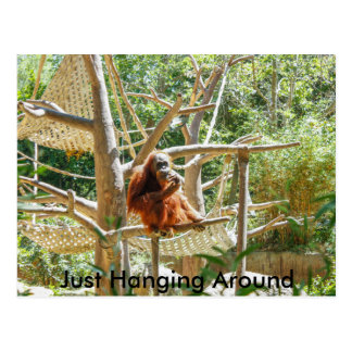 Orangután Postal