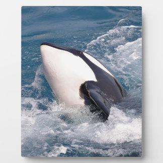 Orca Placa Expositora