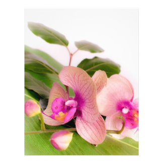 orchid pink folleto 21,6 x 28 cm
