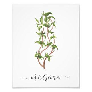 Orégano botánico de la impresión de la hierba de foto