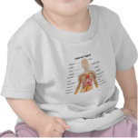 Órganos internos importantes en la carta del cuerp camisetas