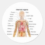 Órganos internos importantes en la carta del etiquetas redondas