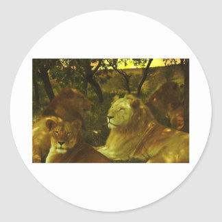Orgullo de los leones pegatina redonda