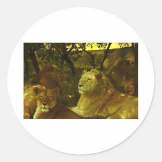 Orgullo de los leones pegatinas redondas
