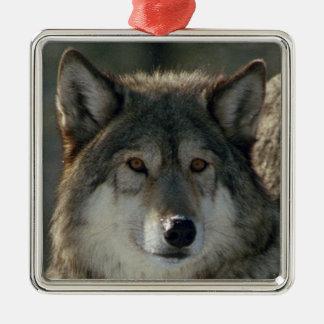 """Ornamento cuadrado superior """"lobo de la Lamar-Alfa Adorno Navideño Cuadrado De Metal"""