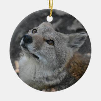 Ornamento del coyote