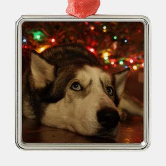 Ornamento del husky siberiano