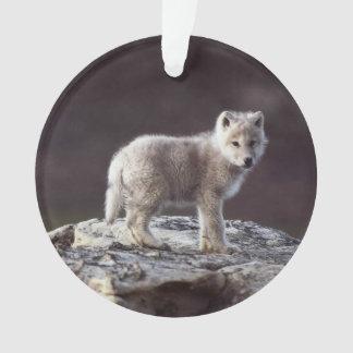 Ornamento del lobo del bebé