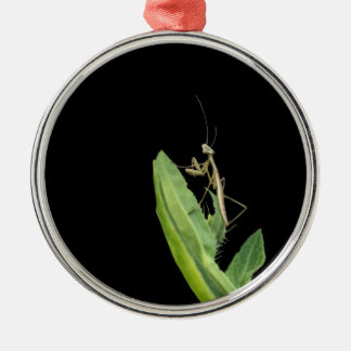 Ornamento del navidad de la mantis religiosa
