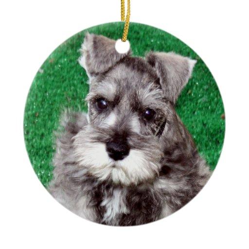... perro de perrito del Schnauzer minia Ornamento De Navidad de Zazzle.es