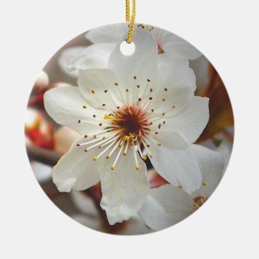 ornamento impar brillante de la flor de cerezo de  ornato