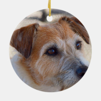 Ornamento lindo del perro