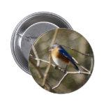 Ornitología del Bluebird Pin