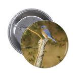 Ornitología del Bluebird Pins