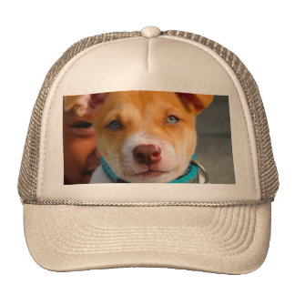 Oro y perro de perrito blanco con el cuello azul gorra