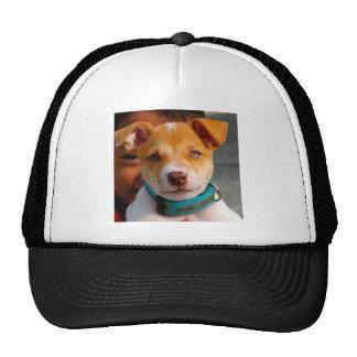 Oro y perro de perrito blanco con el cuello azul gorro