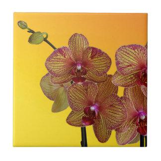 orquídea azulejo cuadrado pequeño