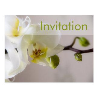 Orquídea blanca • Postal de la invitación del fies