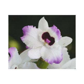 Orquídea blanca y púrpura lienzo
