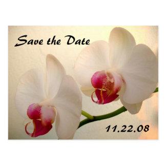 orquídea bonita postal