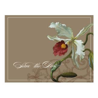 Orquídea de Cattleya de color topo - ahorre la Postal