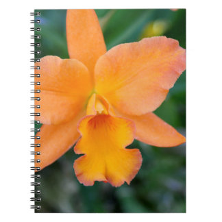 Orquídea de color salmón cuaderno