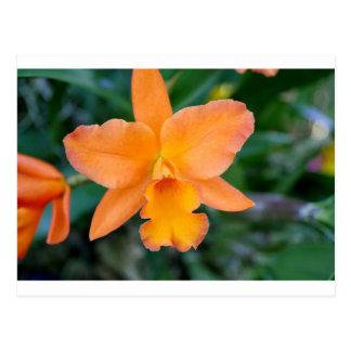Orquídea de color salmón postal