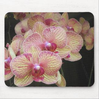 Orquídea de polilla rosada y amarilla Mousepad Alfombrilla De Ratón