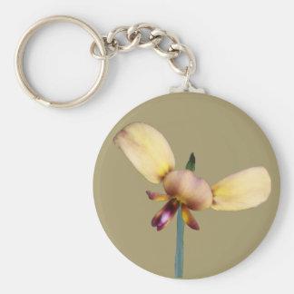 Orquídea del burro llavero