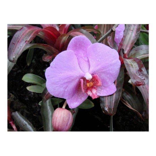 Orquídea en el jardín postal