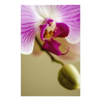 Orquídea Tarjetones