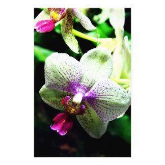 Orquídea Folleto 14 X 21,6 Cm