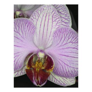 Orquídea Flyer Personalizado