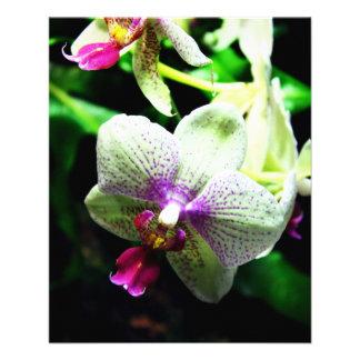 Orquídea Folleto 11,4 X 14,2 Cm