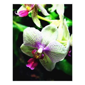 Orquídea Folleto 21,6 X 28 Cm