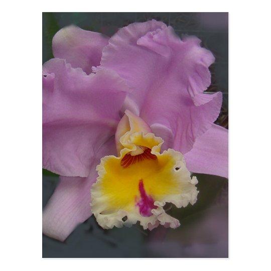 Orquídea hermosa postal