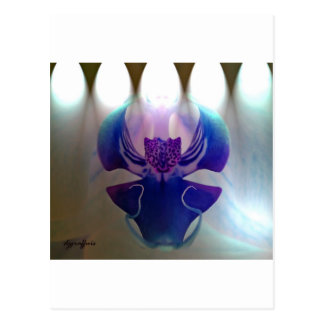 Orquídea magenta postal