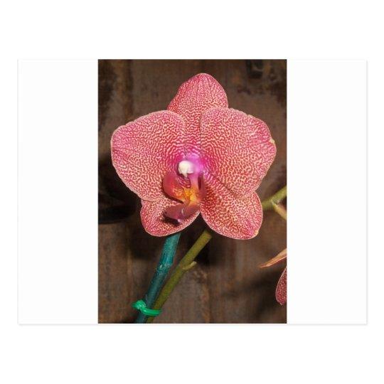 Orquídea Postal