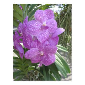Orquídea tailandesa postal